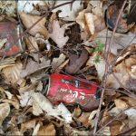 Die Colaplanze ist ein Bodendecker